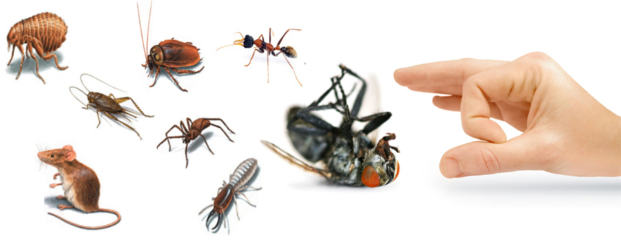 Safe Pest Control Tips